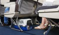 Pets now allowed in passenger cabin on some Hainan Airlines flights