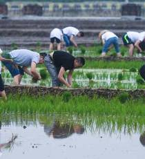 People compete in rice transplanting game in E China